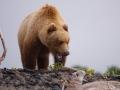 Alaska-230