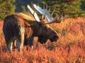 Alaska-192