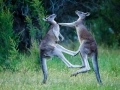 Australien-162