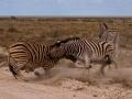 Kalahari-meets-Etosha-104