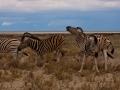 Kalahari-meets-Etosha-106