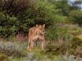 Kalahari-meets-Etosha-115
