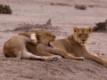 Kalahari-meets-Etosha-122
