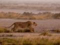 Kalahari-meets-Etosha-145