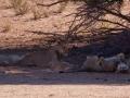 Kalahari-meets-Etosha-18