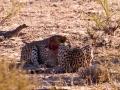 Kalahari-meets-Etosha-20
