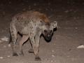Kalahari-meets-Etosha-23