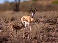 Kalahari-meets-Etosha-29