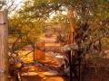 Kalahari-meets-Etosha-3