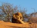 Kalahari-meets-Etosha-38