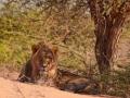 Kalahari-meets-Etosha-39