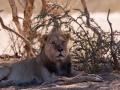Kalahari-meets-Etosha-43