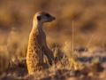 Kalahari-meets-Etosha-48