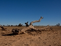 Kalahari-meets-Etosha-53