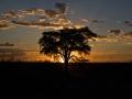 Kalahari-meets-Etosha-58