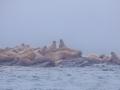 Spitzbergen-Diashow-144