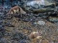Spitzbergen-Diashow-162