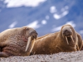 Spitzbergen-Diashow-73