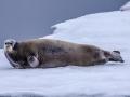 Spitzbergen-Diashow-87