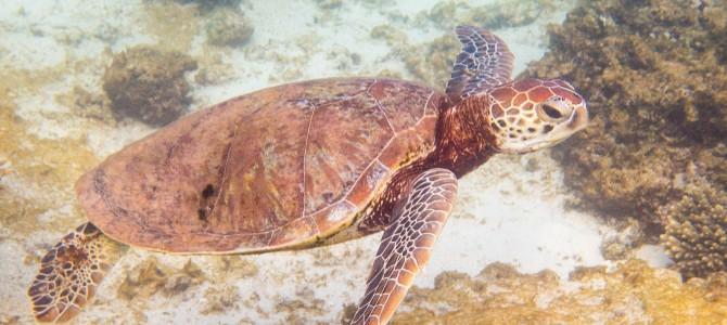 Manta Ray and more @ Ningaloo Reef