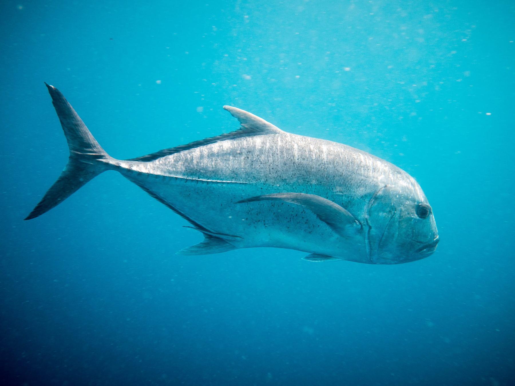 Diving @ S.S. Yongala