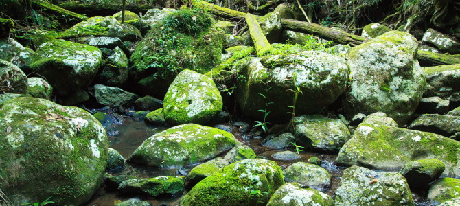 The land before time – Border Ranges NP