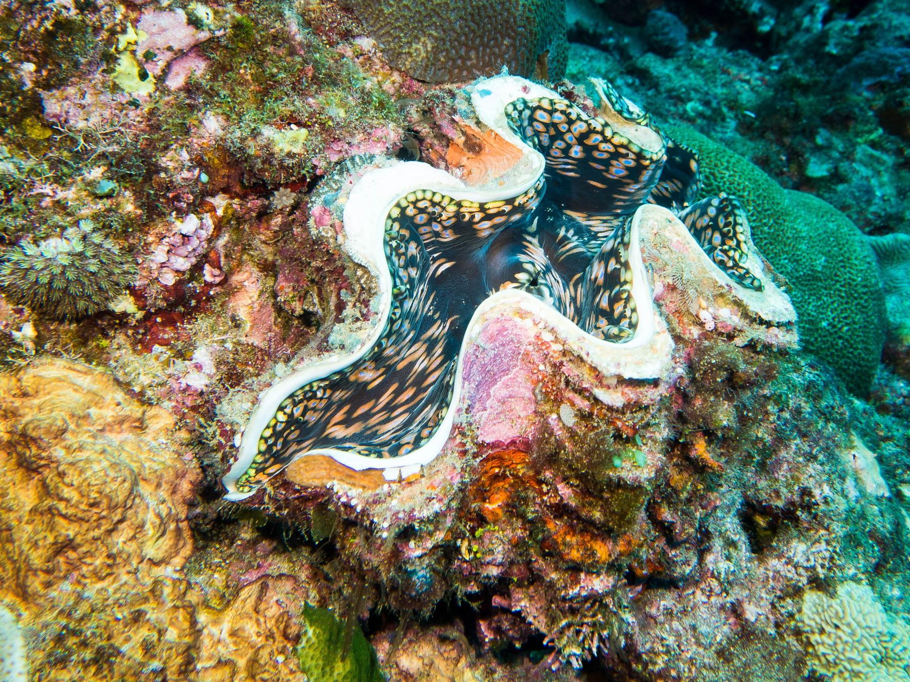 Blog-54-Vanuatu-1