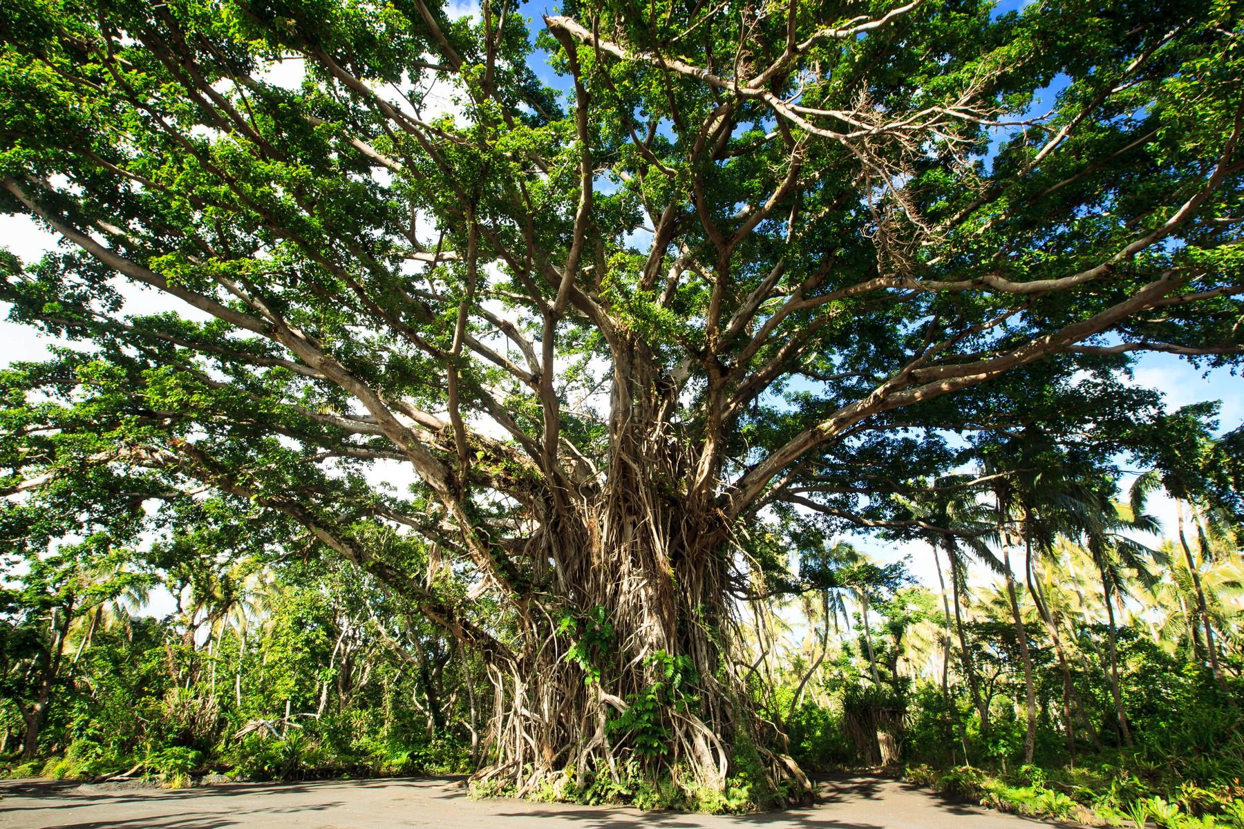 Blog-54-Vanuatu-12