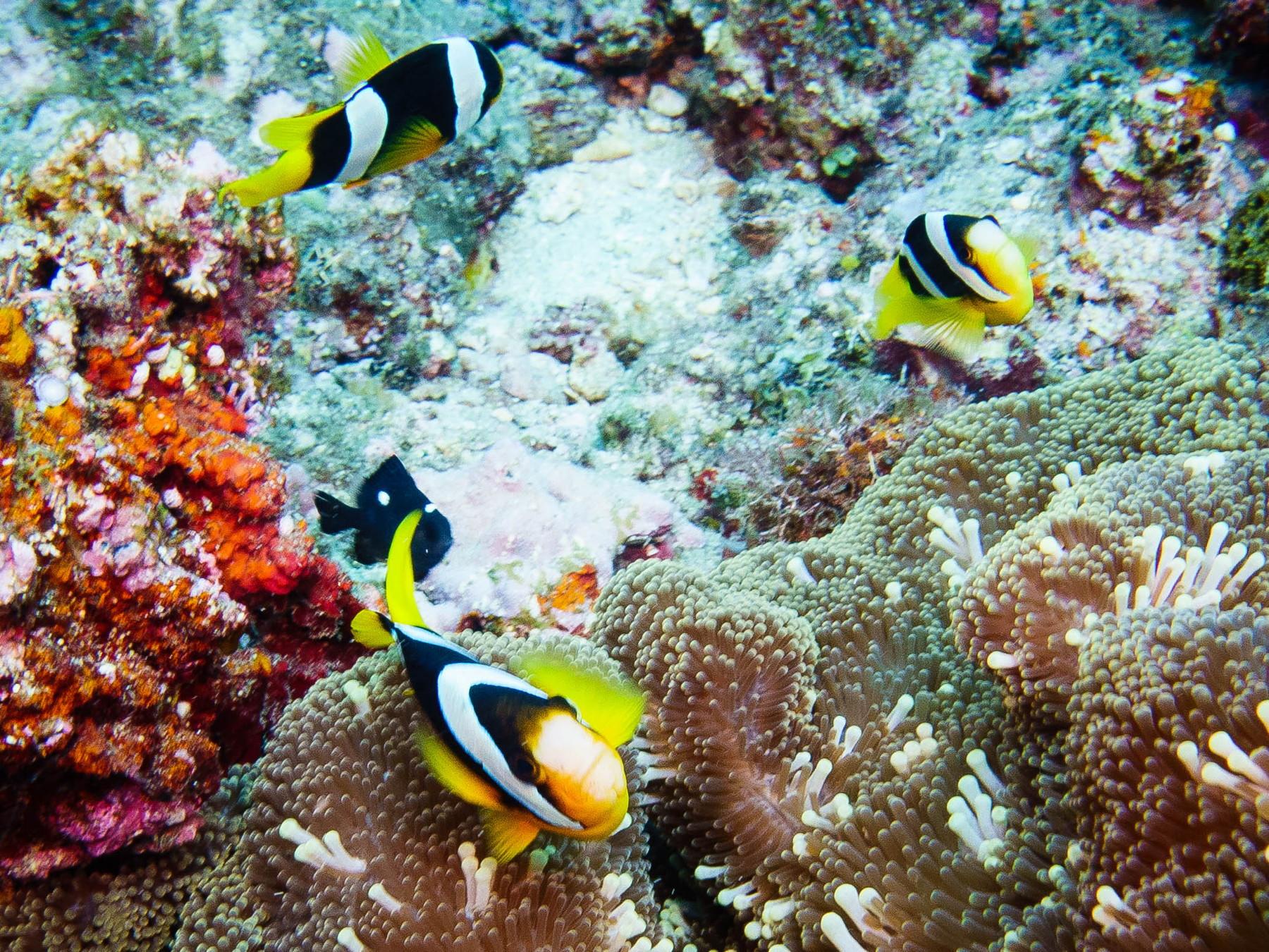 Blog-54-Vanuatu-6