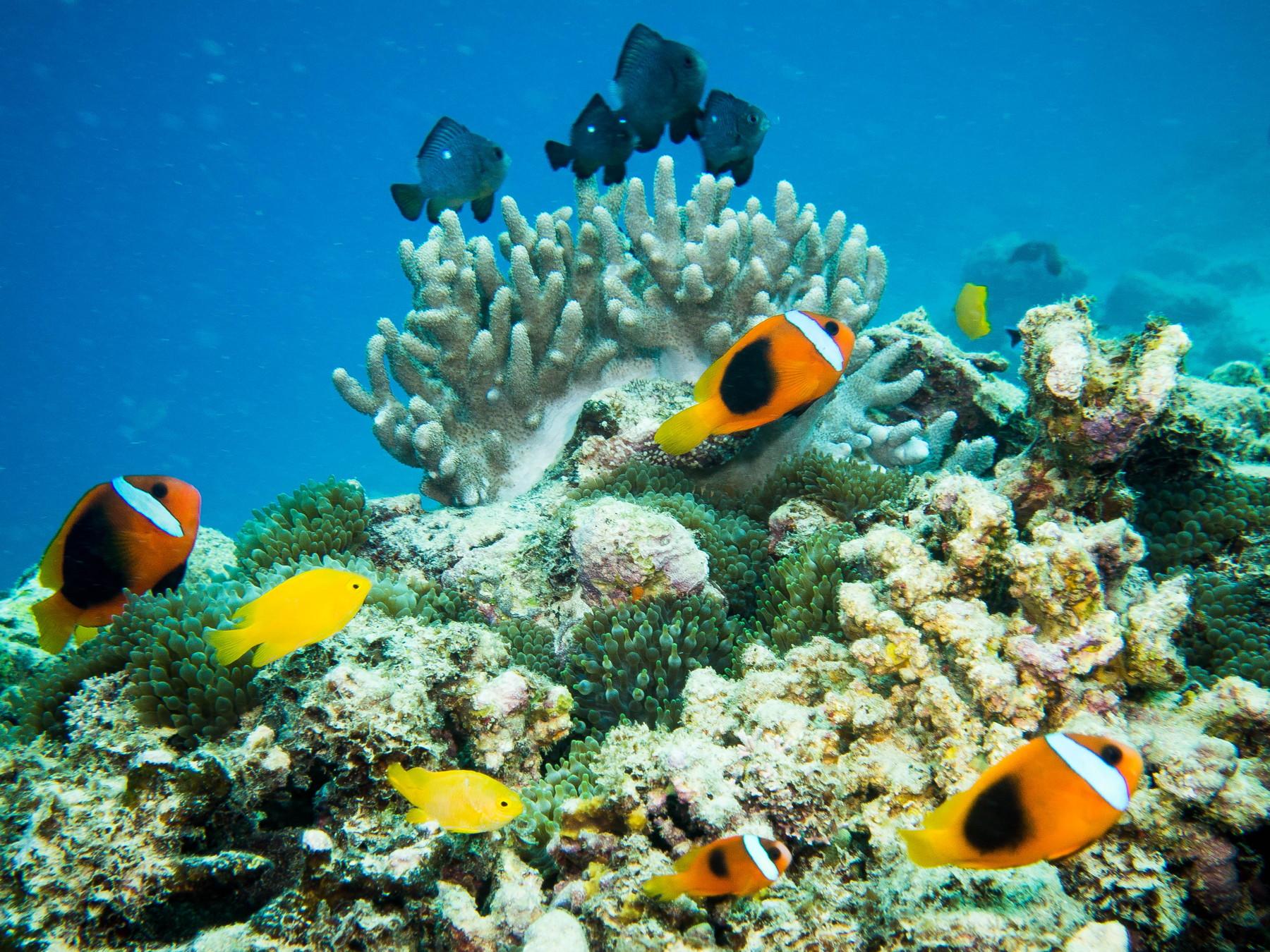 Blog-55-Vanuatu-5