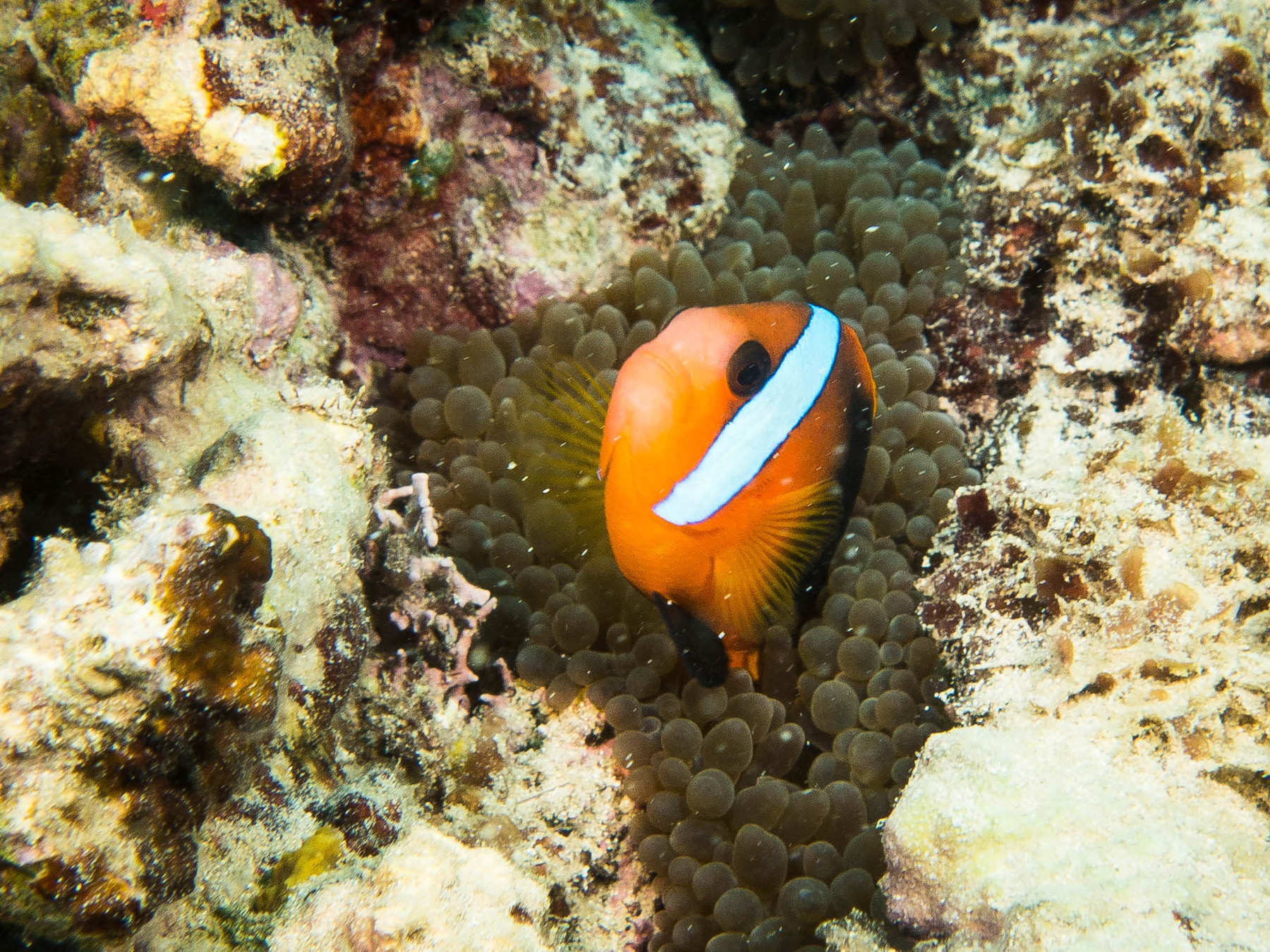 Blog-55-Vanuatu-6