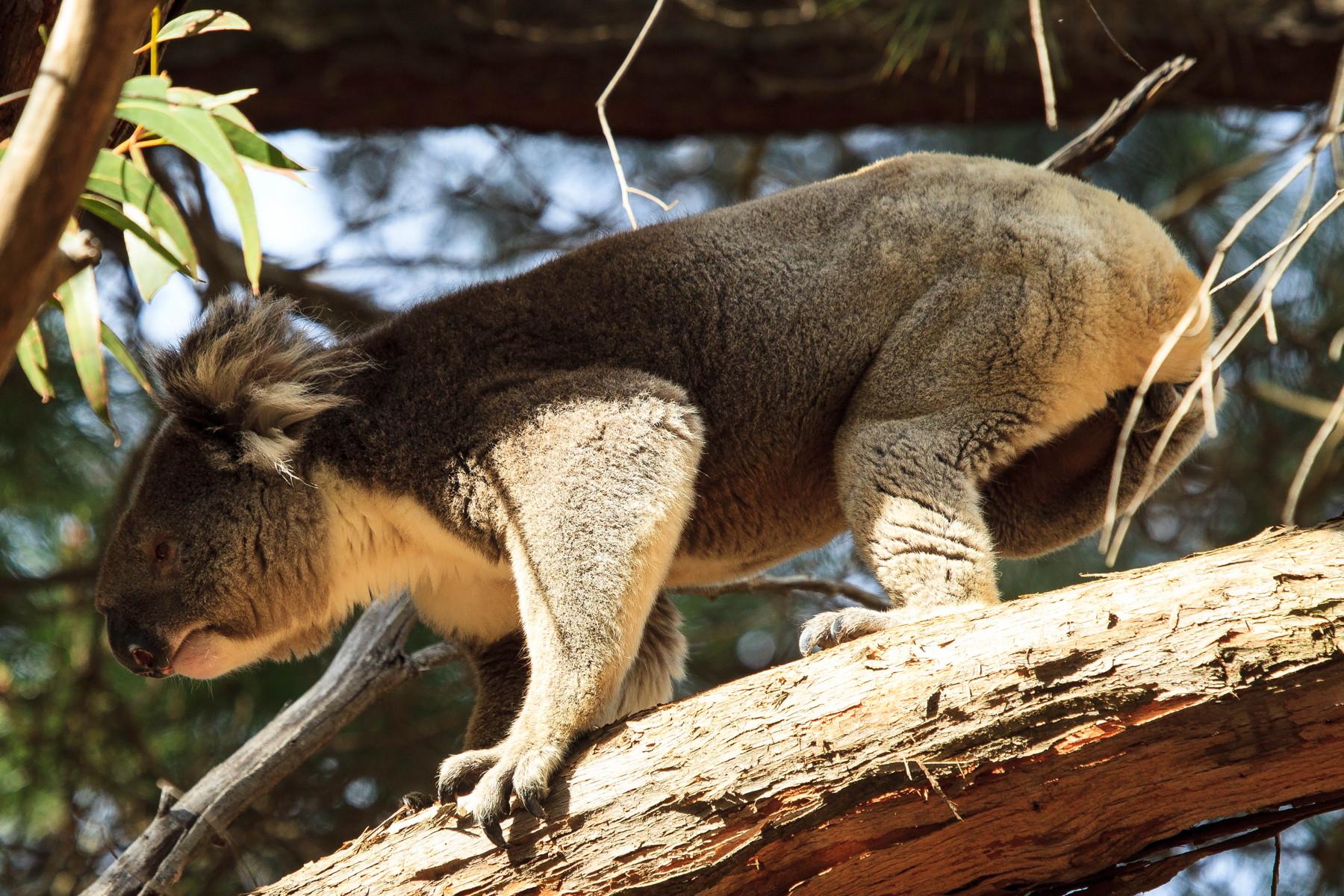 Kangaroo Island – A paradise for wildlife
