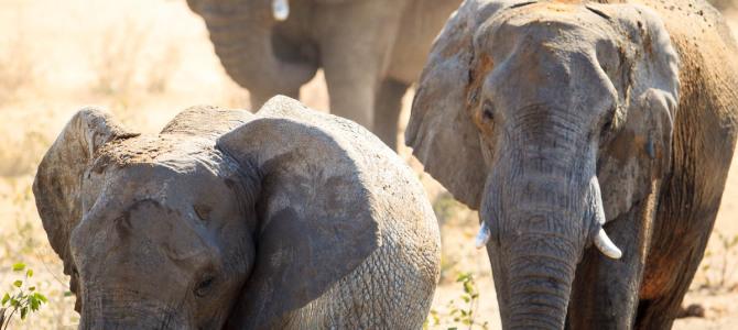 Etosha National Park – Western section (1)
