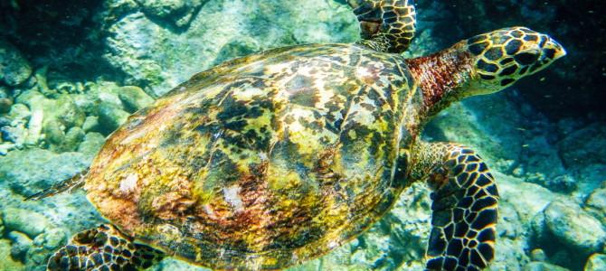 Seychelles – La Digue