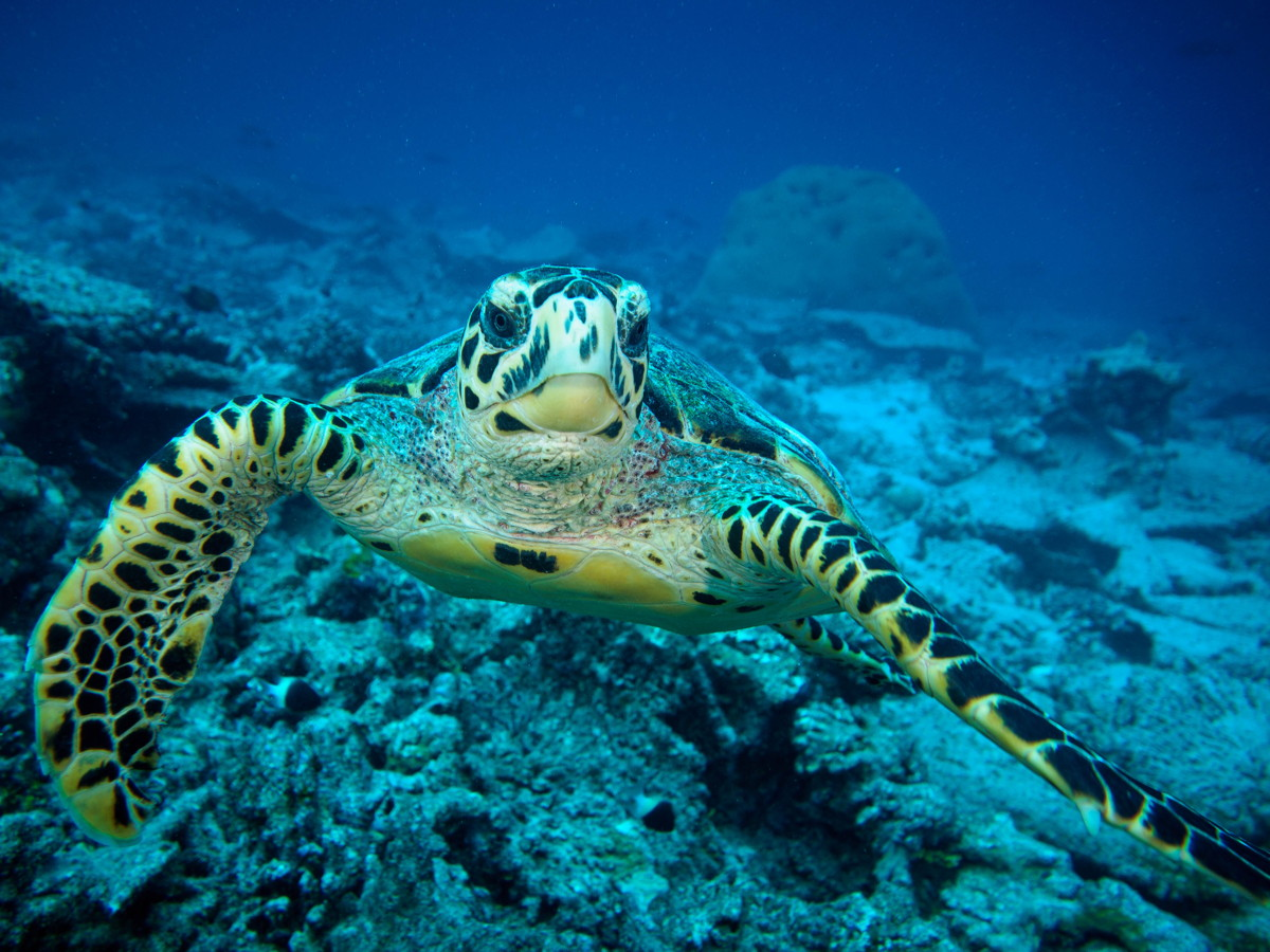 Seychelles – Denis Island