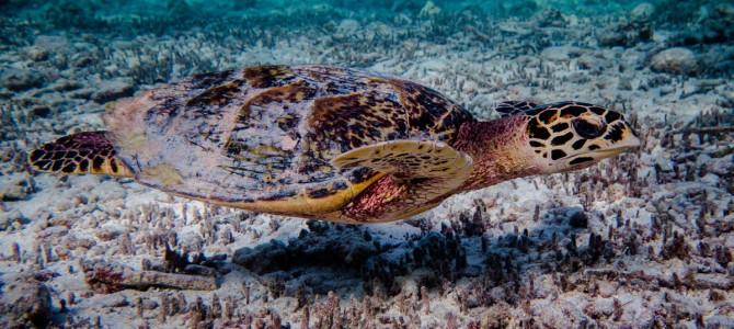 Video – Turtles around Denis Island, Seychelles