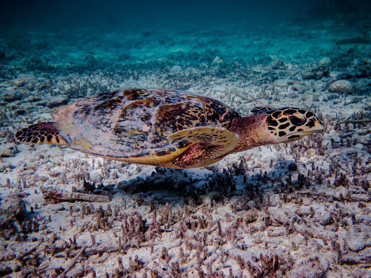 Video – Turtles around Denis Island, Seychelles