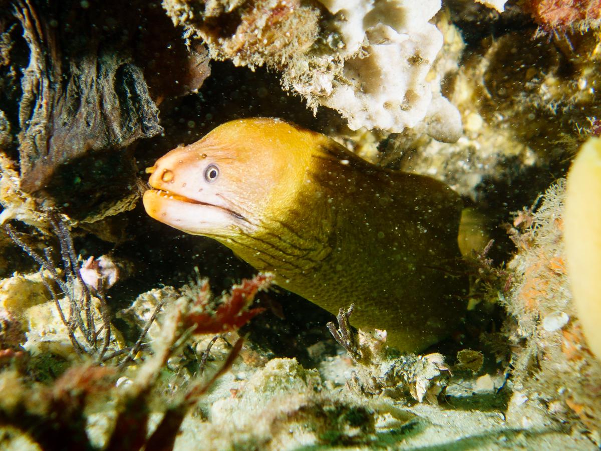 Diving at Nelson Bay, Australia