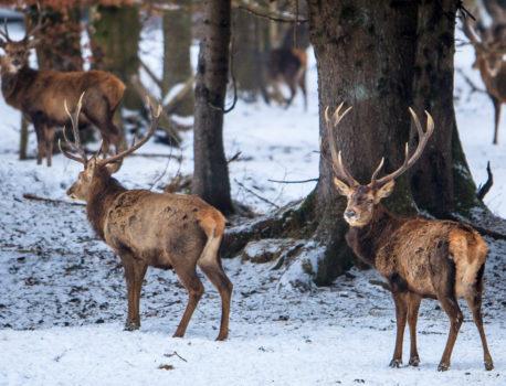 What to do on a winter weekend around Munich?